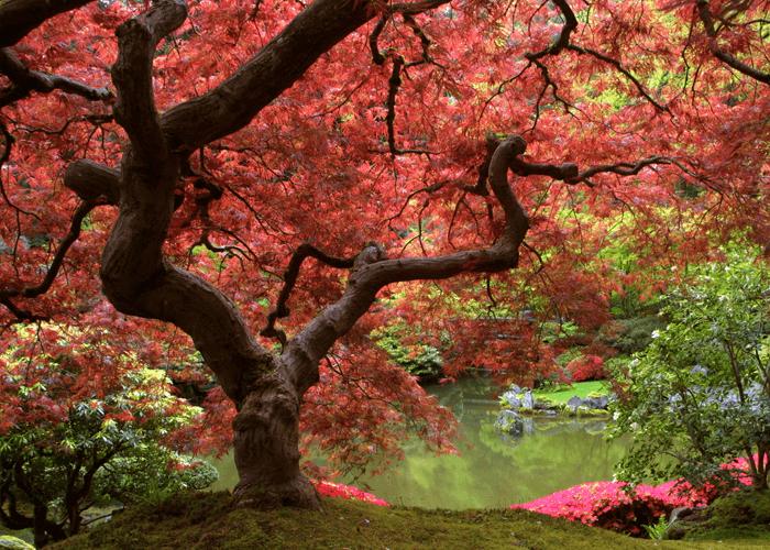 trees-qigong
